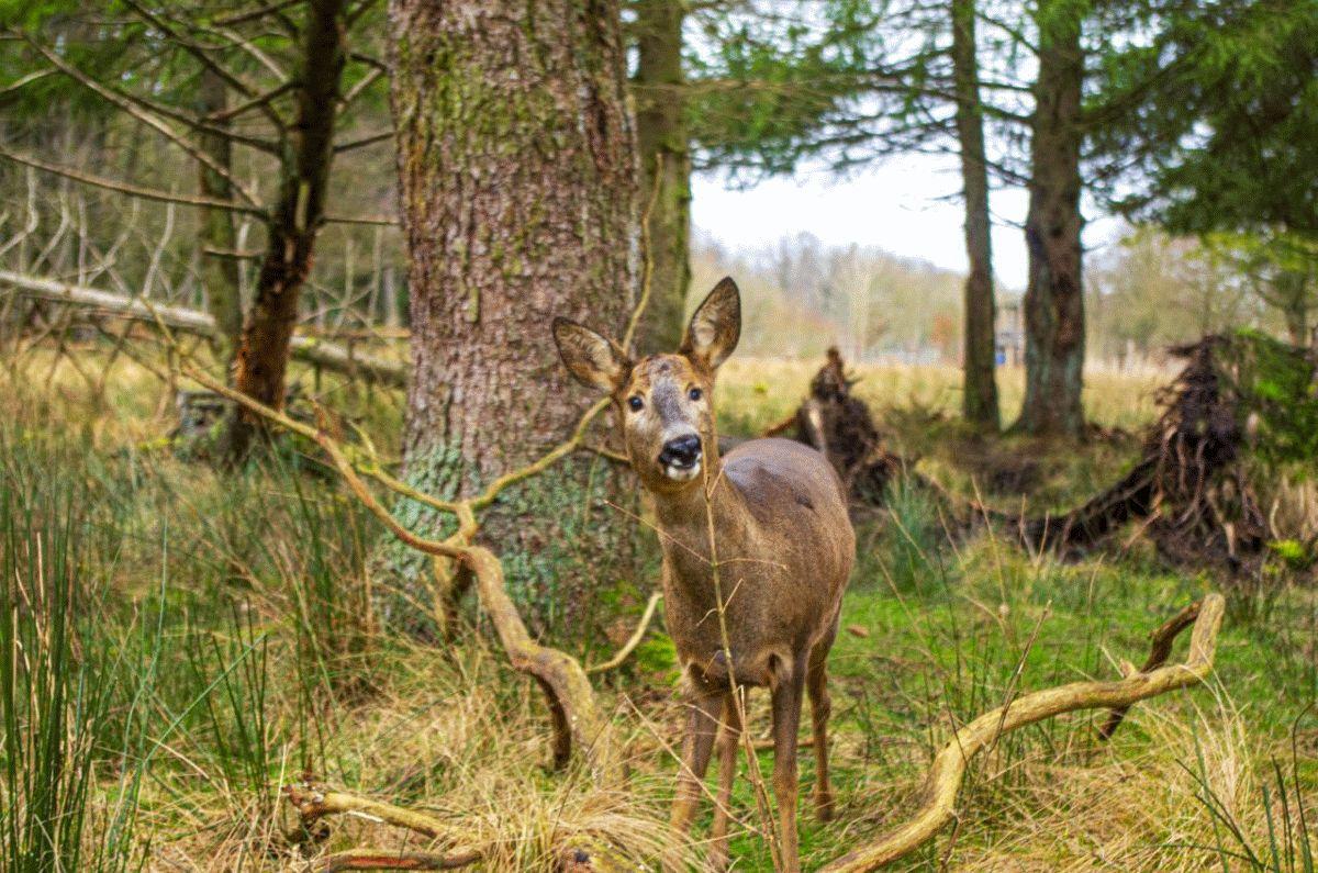 Separee für die Rehe des Wildpark Müden