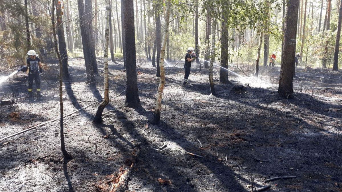 Waldbrände am Dienstsag und am Mittwoch bei Offen halten Feuerwehren der Stadt Bergen in Atem *** aktualisert
