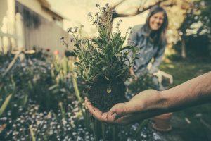 Blumenzwiebeln für den Garten @ 4Generationen Park
