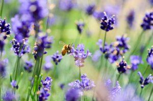Der Garten als Lebensraum für Biene & Co. @ Berufsbildende Schule 3