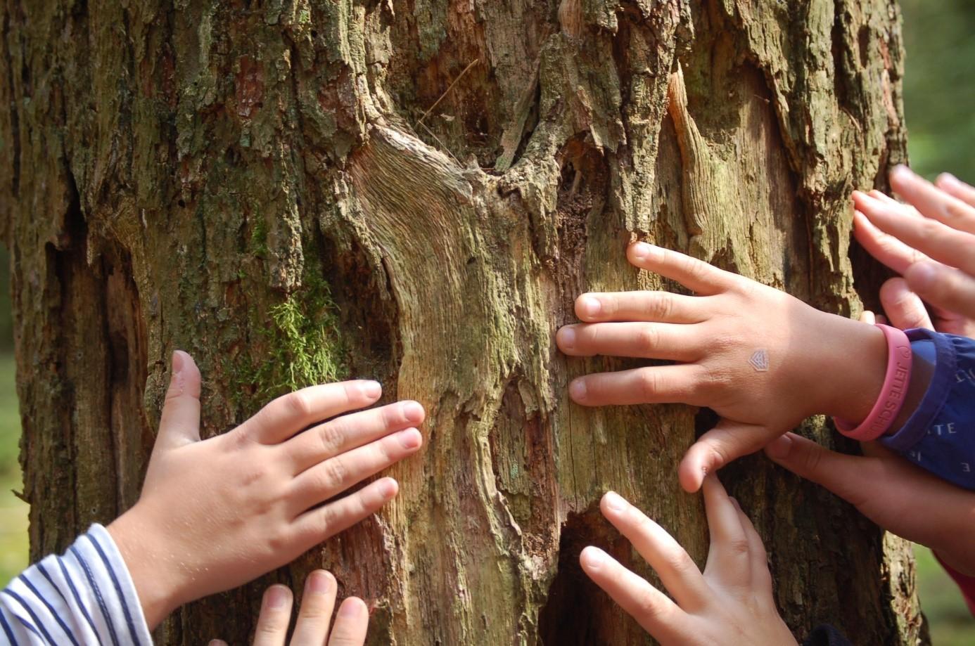 Ferienprogramm für kleine Waldentdecker – Spiel Spaß und Waldwissen