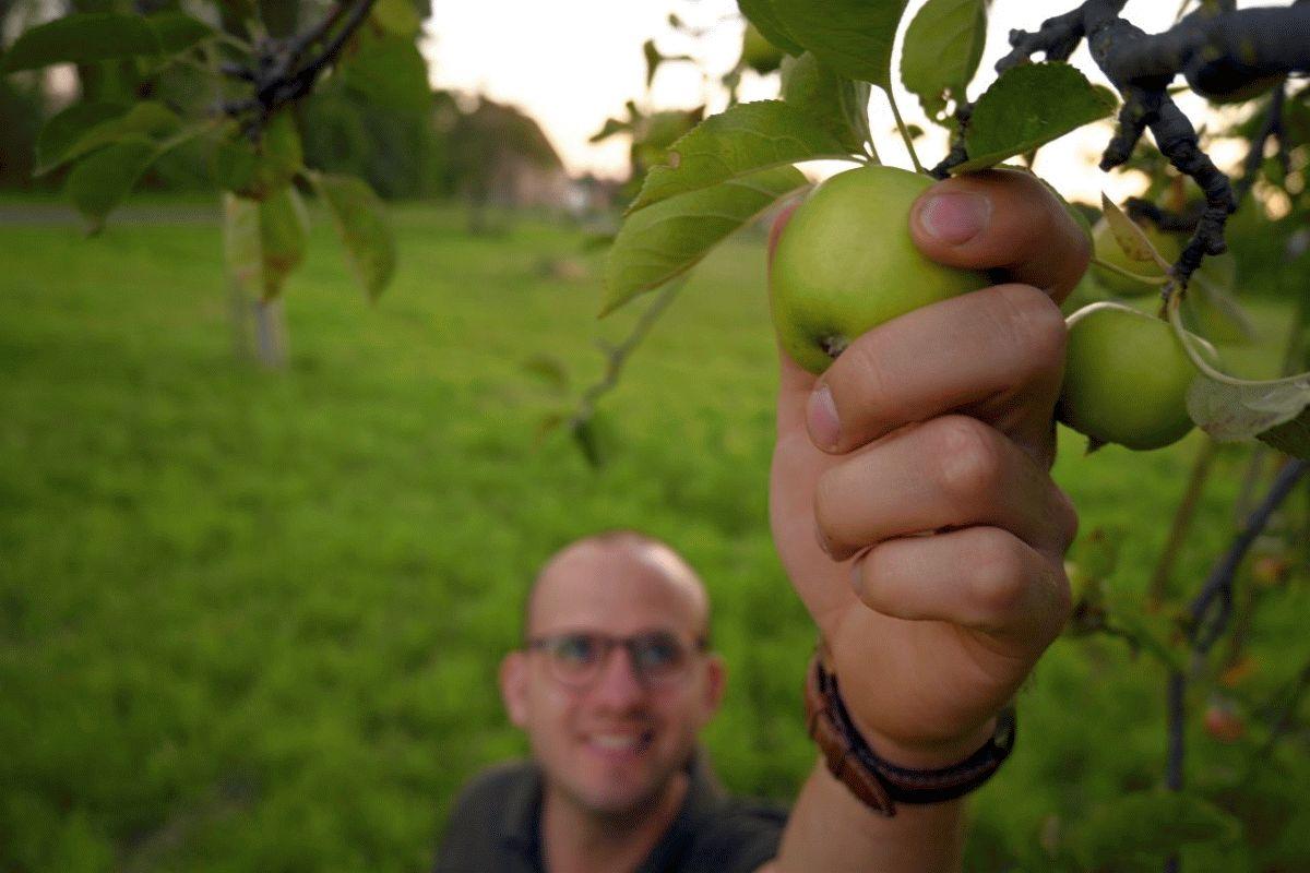 """Obst ernten gegen Lebensmittelverschwendung – das Ernteprojekt """"Gelbes Band"""" ist voll im Gange"""