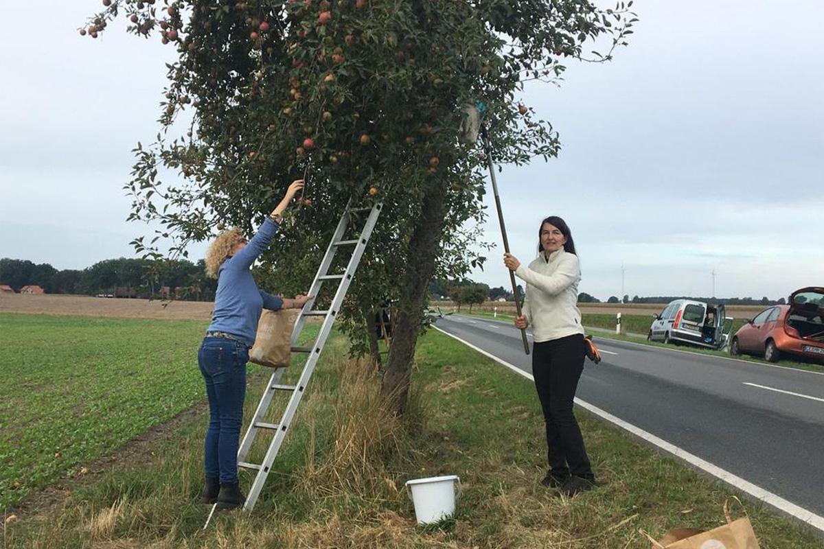 SPD Bergen und Südheide beim Obstpflücken