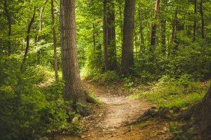 Wald ist mehr als Holz: Gesunde Wälder - gesunde Menschen @ Saal der VHS