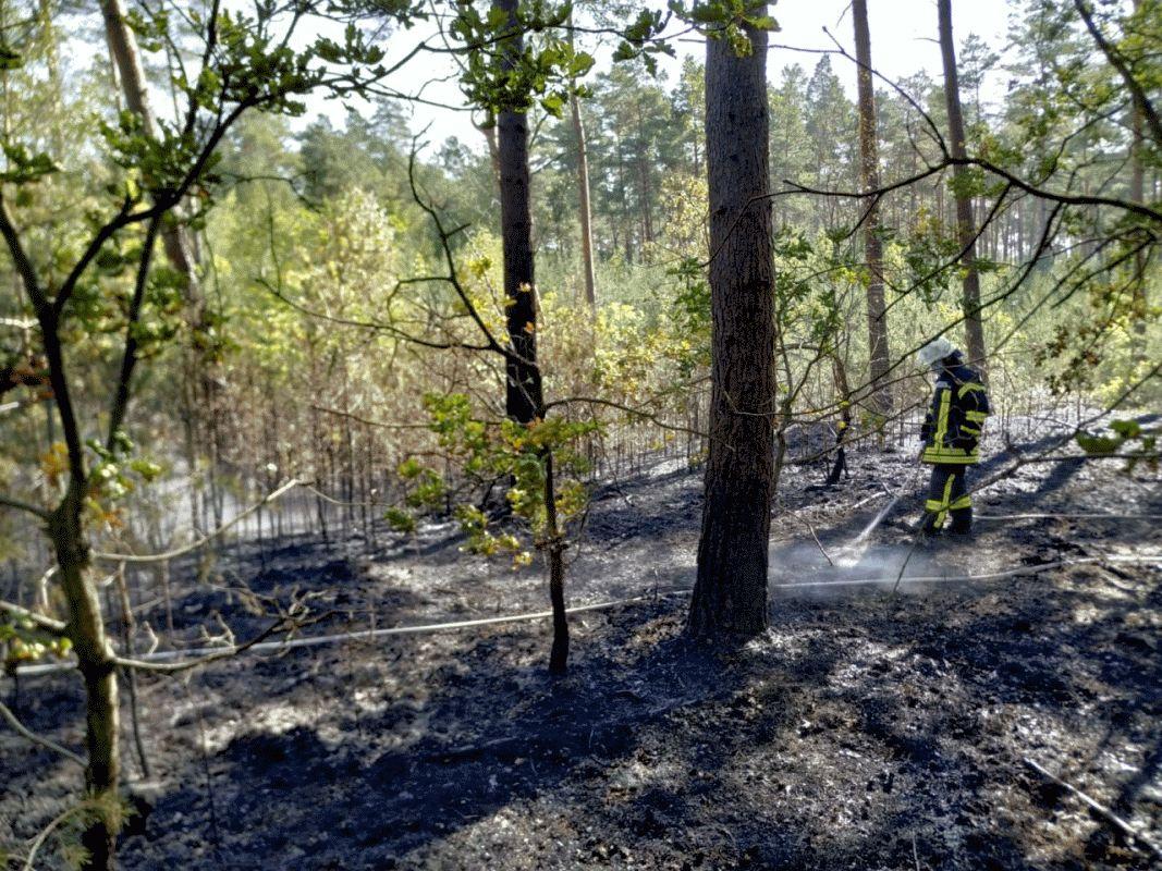 Waldbrand in Wietze