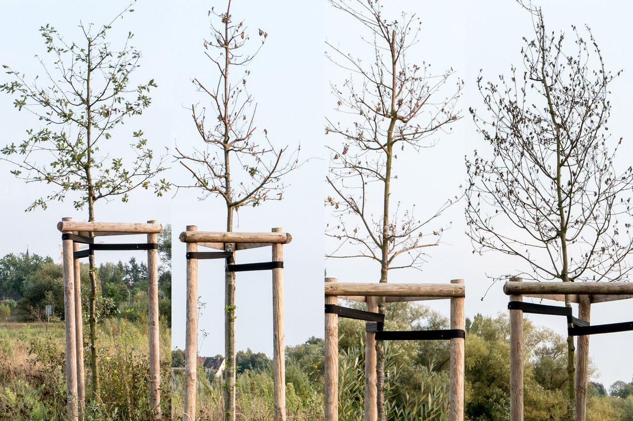 "FDP: ""Nicht Bürokratie hilft den Bäumen, sondern Wasser!"""