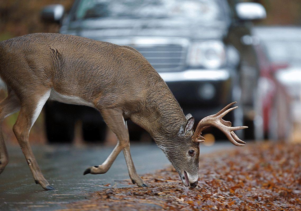 Vorsicht ist besser als Nachsicht: Mit dem Fahrzeug sicher durch den HerbstGefahrlos durch die nasse Jahreszeit