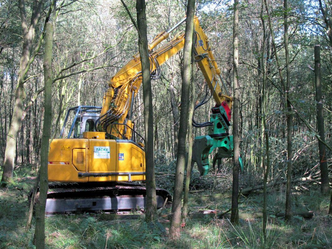 Wald braucht Pflege – Klimaangepasster Waldumbau im Harsebruch