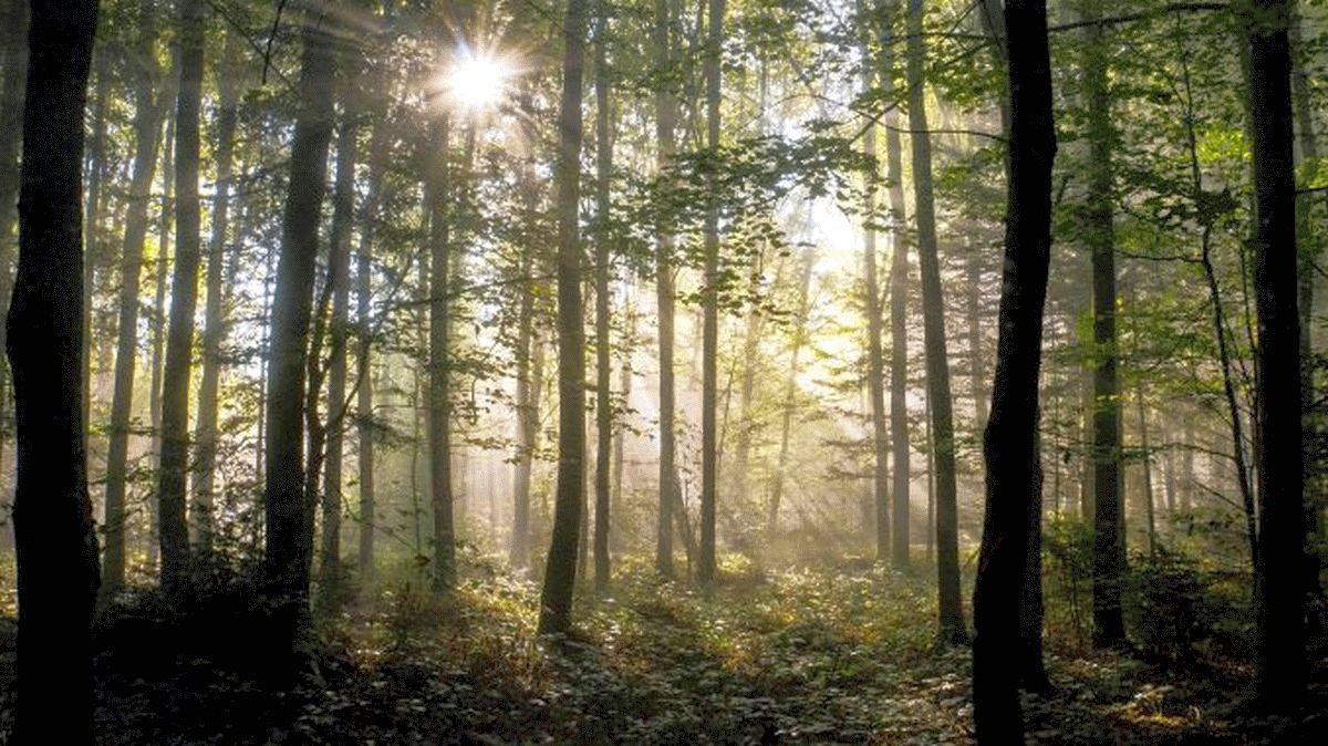 Waldbesitzer fordern Honorierung für Klimaschutz – Nachweise könnten über forstliche Zertifizierungssysteme erbracht werden