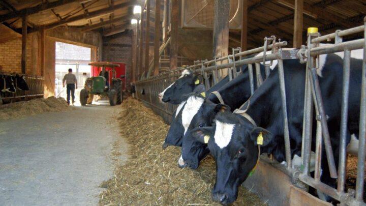Auch Milcherzeuger leiden unter Rabattschlachten – Landvolk fordert ein Umsteuern in der Preis- und Vertragspolitik