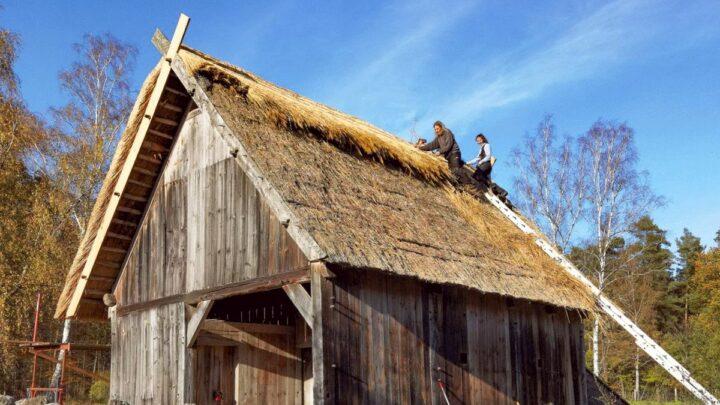Ein neues Dach für das Backhaus – Reetdachdeckerteam im Museumsdorf im Einsatz
