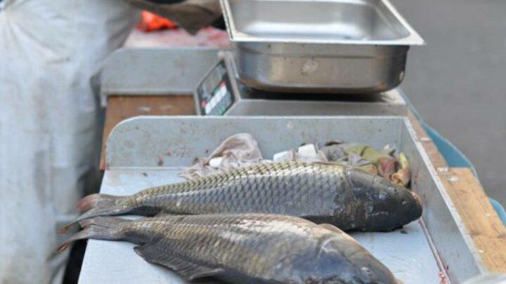 Wer Karpfen isst, schützt die Umwelt – Teichwirtschaft hat in Niedersachsen eine lange Tradition