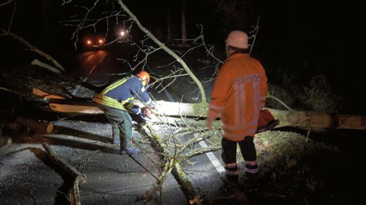 PKW kollidiert mit umgestürztem Baum