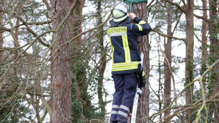 Westerceller Feuerwehr kümmert sich um den Naturschutz